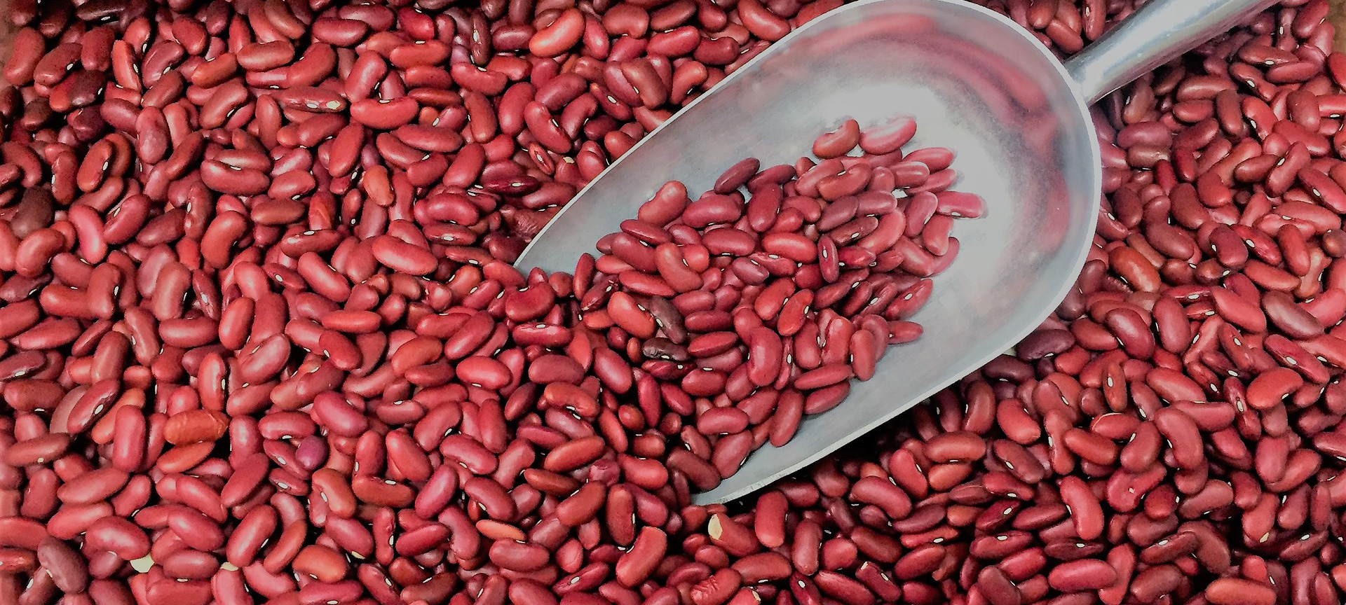 Pulses Low Fat Source, High Source of Fiber